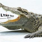 Alligator on Olymp Trade
